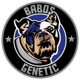 Babos Genetic