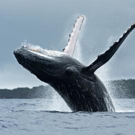Whale Squad