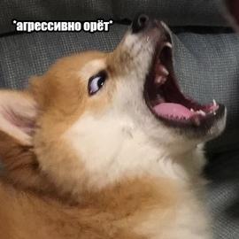 sparog