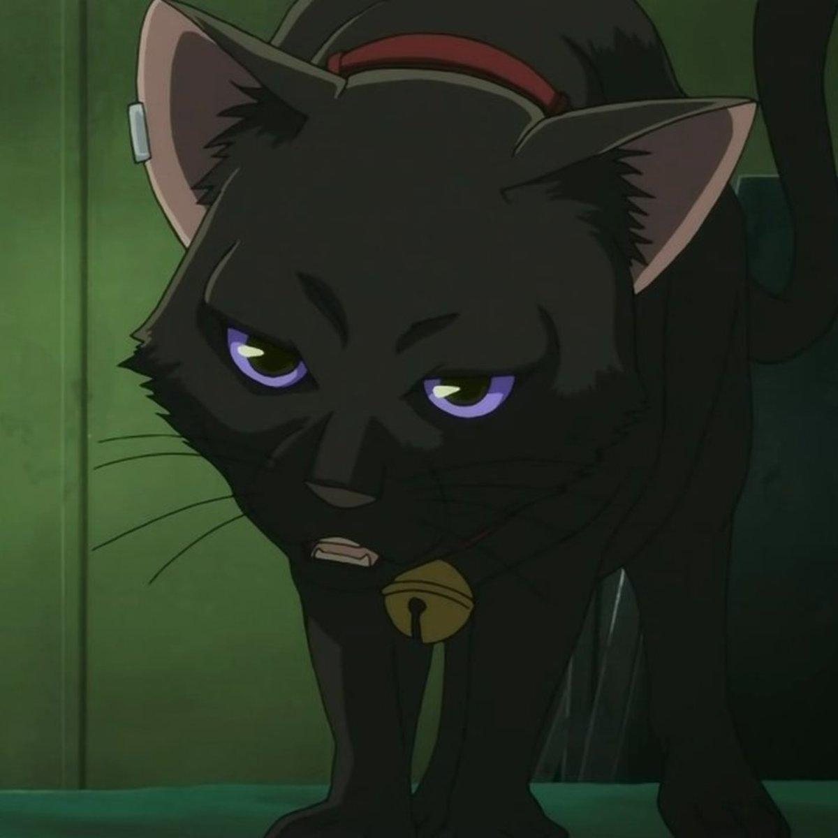 Темнее черного кот картинки